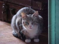 Tabby - Grey - Sally - Medium - Baby - Female - Cat