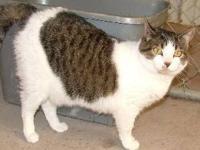 Tabby - Grey - Tilly - Medium - Adult - Female - Cat