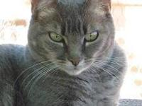 Tabby - Grey - Zoe - Large - Baby - Female - Cat Zoe