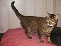 Tabby's story Meet Tabby! She is a 2 year old