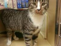 Tabby - Jane - Small - Young - Female - Cat This sweet