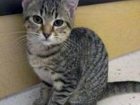 Tabby - Lucy And Snoopy - Large - Baby - Male - Cat