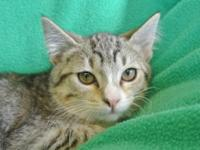 Tabby - Luv Bug - Large - Baby - Female - Cat Luv Bug