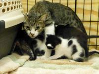 Tabby - Mamacita And 8 Kittens! - Small - Adult -