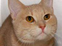 Tabby - Moses - Medium - Young - Male - Cat Moses is a