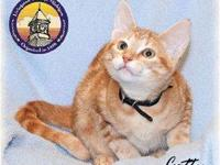 Tabby - Orange - Catty - Medium - Young - Female - Cat