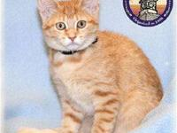 Tabby - Orange - Cidalee - Medium - Young - Female -