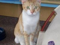 Tabby - Orange - Gigi - Medium - Young - Female - Cat