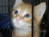 Tabby - Orange - Neon - Medium - Baby - Male - Cat Neon
