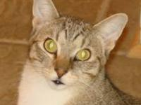 Tabby - Red Man (28622) - Small - Young - Male - Cat If