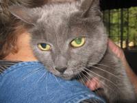 Tabby - Tabitha - Small - Senior - Female - Cat Grandma