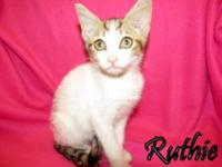 Tabby - White - Ruthie - Medium - Baby - Female - Cat