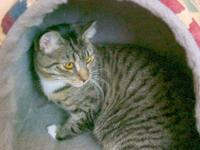 Tabby - Winnie - Medium - Adult - Female - Cat One of
