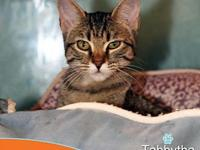 Tabbytha's story This little brown tabby is a cute