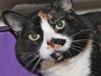 Tabitha's story Tabitha is a calico Domestic Short Hair