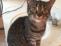Tabitha's story My name is Tabitha. I was rescued at 3