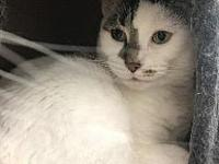 Tabitha's story friendly, easy going, affectionate,