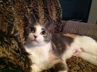 Tabitha18's story All Purr Partners Adoptable Cats