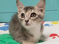 Tabitha's story Tabitha is a sweet 12 week old female