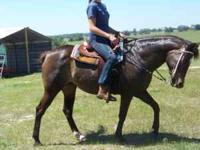 Have a small horse training business and Im looking to