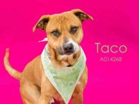 TACO's story Hello I am Taco! I am new here to the