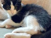 Taco's story Taco is a female kitty born to a litter of