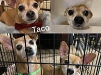 My story *BONDED PAIR* Taco - Male, 10 years young,
