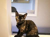 Taffeta's story Taffeta is a loving, playful kitten who