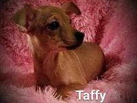 Taffy's story **PLEASE READ TO THE END FOR IMPORTANT