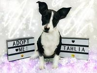 Tahlia's story You can fill out an adoption application