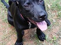 Tailor's story ailor is a stunning 5-6 months lab mix,