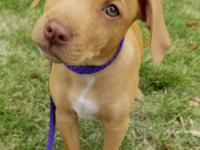 Palmetto Paws Animal Rescue hosts Adoption Events every