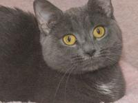 Talia is a sweet, gentle, affectionate girl who loves