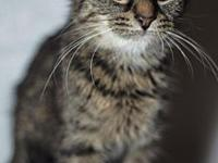 Talini (teenage female kitten)'s story This is Talini a