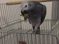 I have a 2 year old male African grey. He's very sweet