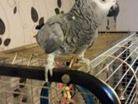 My African Greys name is Lilly, as you can see from the