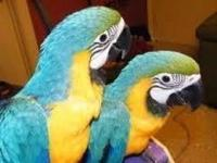 Our parrots are well tamed and completely house trained