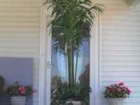 I have two artificial palm trees in light weight