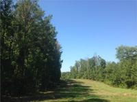 This 65 acre tract lies just off of Highway 78 on