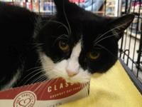 Tallie is a short-haired, black and white female cat