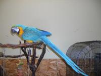 Very nice feathers, good looking blue and gold macaw,