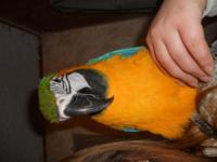 Blue and gold macaw was told women but except certain,