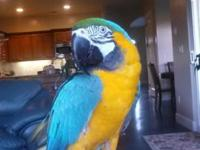 Beautiful tame macaw not sure of gender. Is on a seed