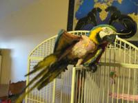 I have a magnum double yellow and a blue and gold macaw