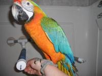 Very pretty macaw with bright yellows and blues with