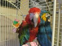 Hello, I have two macaws that are looking for a new