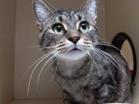 Tammi's story Tammi would love to cuddle with you. She