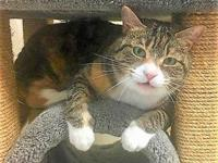 Tammie's story Hello! I'm a large, 6-year-old pretty