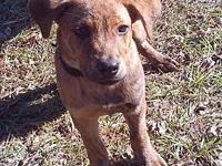 Tank's story Tank came to us from a local vet. He is up