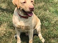 Tank's story Active boy looking for active family to